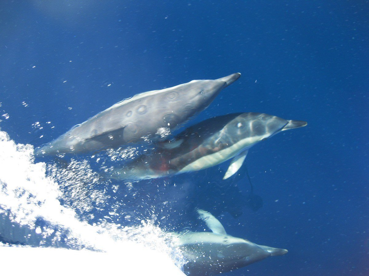 dolphins on the costa del sol